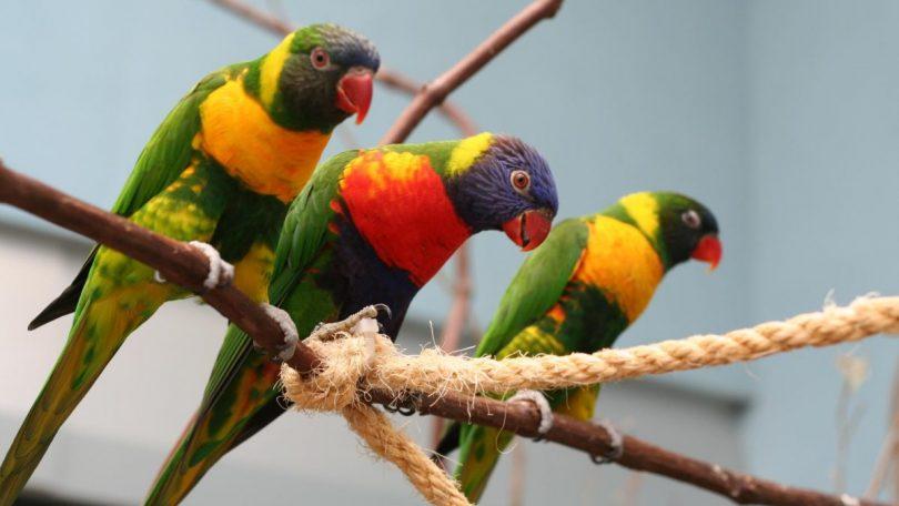 Birds at the National Aviary
